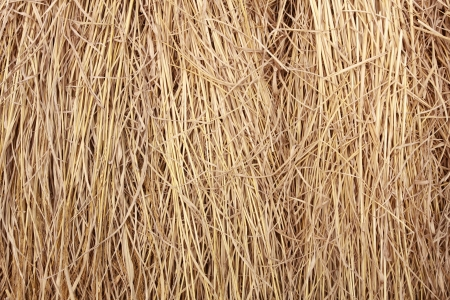 full frame close up brown straw heap photo