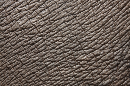 contrast Elephant skin full frame shot Stock Photo