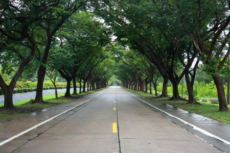 empty road with tree on both side Stock Photo