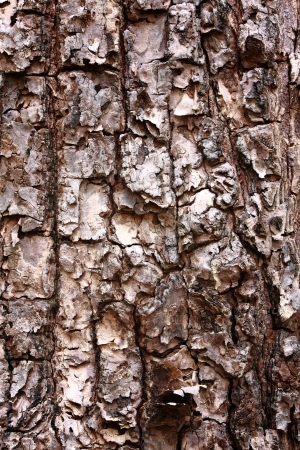 Bark Tree texture full frame in nature photo