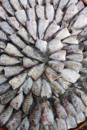 gourami: dry gourami fish full frame background