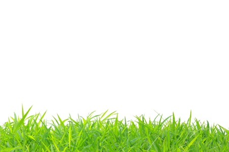 frame of grass at below edge Stock Photo