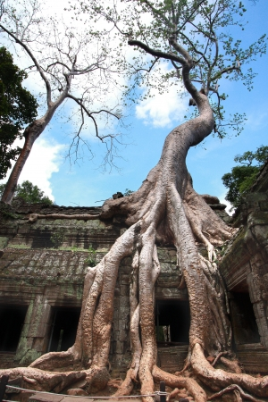 reclamation: Strangler tree roots consuming a temple roof in Ta Prohm