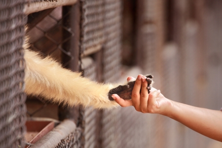 A person touch hand together with a monkey in cage photo