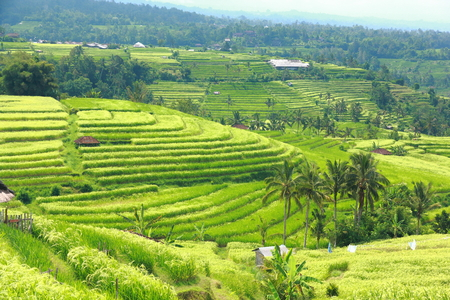 Bali Jatiluwih Reisterrassen Feld Indonesien Standard-Bild - 26665499