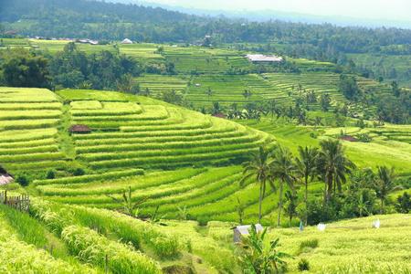 Bali Jatiluwih Rice Terraces field Indonesia  Stock Photo