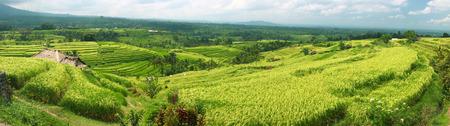 Bali Jatiluwih Rice Terraces field Indonesia panorama photo