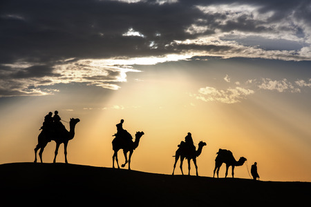 Camel caravan silhouette through the sand dunes lead nose at Thar Desert India dramatic sunlight  background