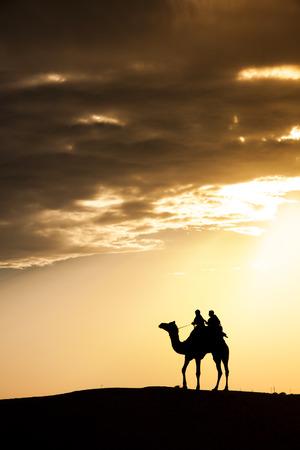 thar: A desert local walks lead nose camel through Thar Desert India dramatic sunlight background