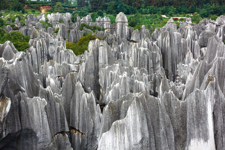 limestone Stone forest a UNESCO World Heritage Sites, Kunming Yunnan China.