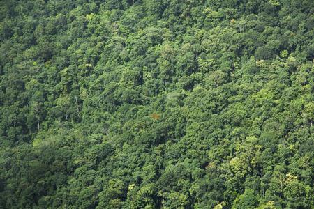Vysoký úhel pohledu na strom v lese