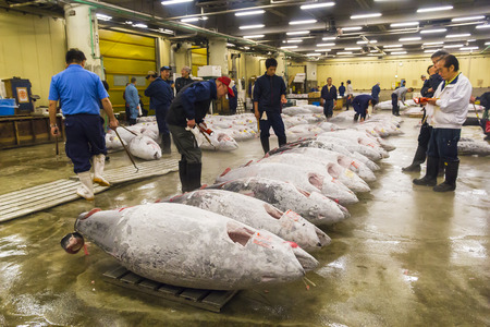 TOKYO, JAPAN - OCTOBER 25: Tuna for auction at Tsukiji fish market on Oct  25, 2013 in Tokyo. Tokyos fish market is the biggest wholesale fish and seafood  market in the world