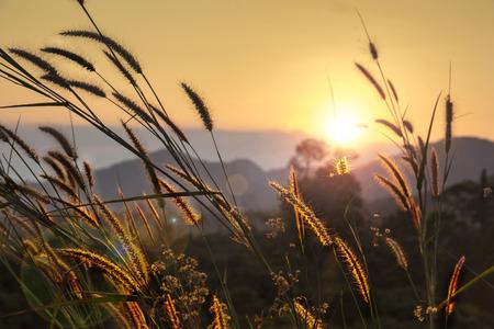 pampas grass rim light mountain landscape background Stock Photo