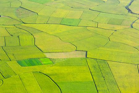 green field: rice field growth in Bac Son, Vietnam. Stock Photo