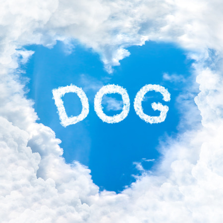 love dog word cloud gradient blue sky background only photo