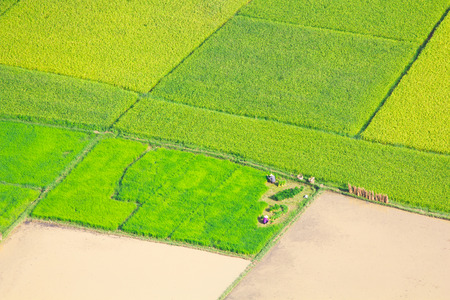 grass plot: rice field growth in Bac Son, Vietnam. Stock Photo