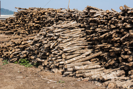 pile of logs: Pile of small wood logs on land