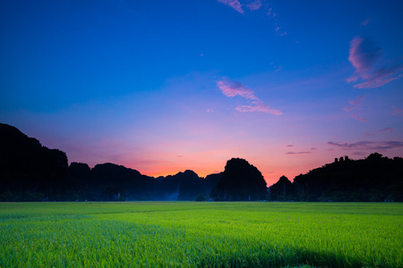 Nature rice paddy field during evening with colorful sky and mountain on background