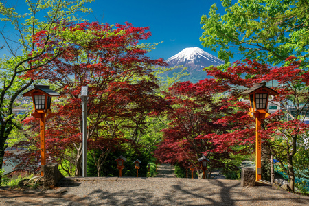 Fuji mountain background and walkway with red maple around Stock Photo