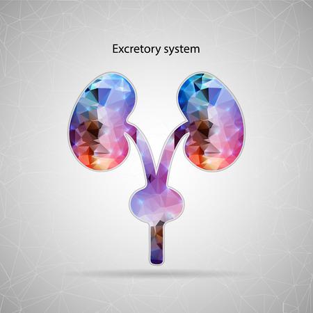 Web およびモバイル アプリケーションの背景に分離された腎システムの抽象的な創造的な概念ベクトルのアイコン。ベクトル イラスト テンプレート   イラスト・ベクター素材