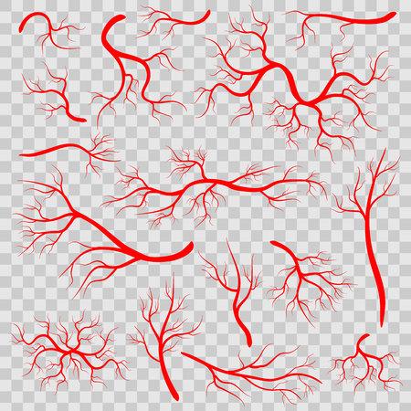 붉은 혈관 배경에 고립의 크리 에이 티브 벡터 일러스트. 인간 혈관, 건강 동맥, 예술 디자인. 추상 개념 그래픽 요소 모세관. 혈액 시스템