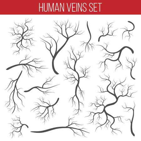 Ilustración de vector creativo de venas rojas aisladas sobre fondo. Vaso humano, arterias sanitarias, diseño artístico. Capilares del elemento gráfico del concepto abstracto. Sistema sanguíneo.