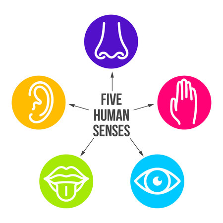 Creative vector illustration line icon set of five human senses. Vision, hearing, smell, touch, taste isolated on transparent background. Art design nose, eye, hand, ear, mouth with tongue element. Foto de archivo - 115005376