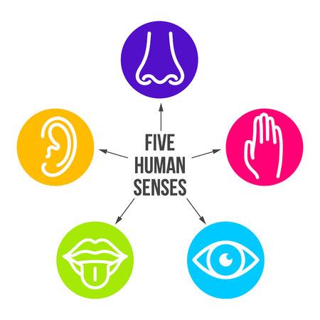 Kreative Vektorillustrationslinie Symbolsatz von fünf menschlichen Sinnen. Sehen, Hören, Riechen, Berühren, Geschmack einzeln auf transparentem Hintergrund. Kunstdesign Nase, Auge, Hand, Ohr, Mund mit Zungenelement.