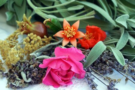 Fresh medicinal herbs and flowers from garden for making natural and organic cosmetics or drugs