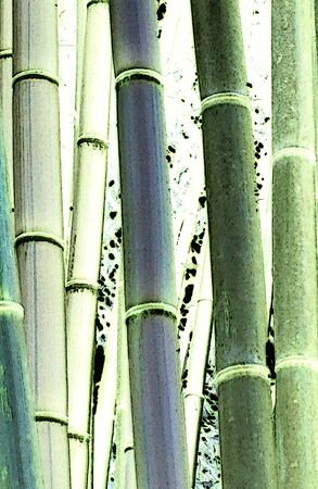 Illustration of detail on the bamboo trees branches in various green colors in the park Stockfoto