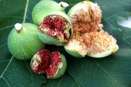 Natural ripe and unripe figs on the green background on the figs leaves