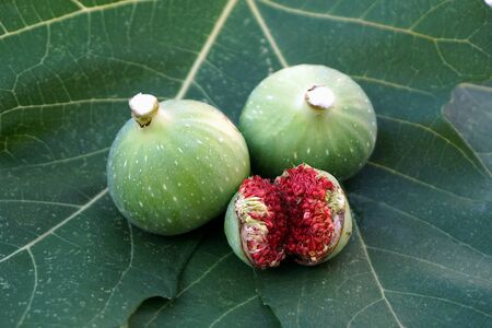 Figs milky sap on the top of two unripened figs and one cracked below, natural food cultivation Stockfoto