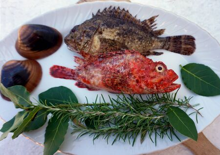 Sea fish, red fish Scorpaena scrofa and scorpion fish Scorpaena porcus on the plate, decorated with natural Mediterranean herbs and sea shells