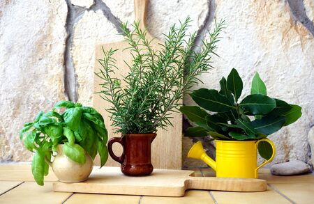 Collection of three mediterranean herbs, basil, laurel and rosemary in decorative pots on rustic background