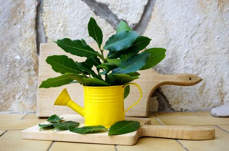 Just picked up green fragrant branches and leaves of laurel in a decorative yellow bucket on a stone background