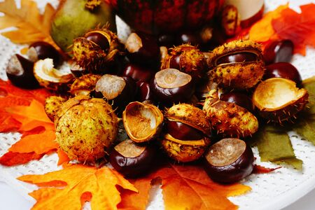 Rustic background with wild chestnuts and shell in vivid color leaves close up view Stockfoto