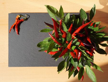 Raw red chili peppers plant from top and with black background with copy space Stockfoto