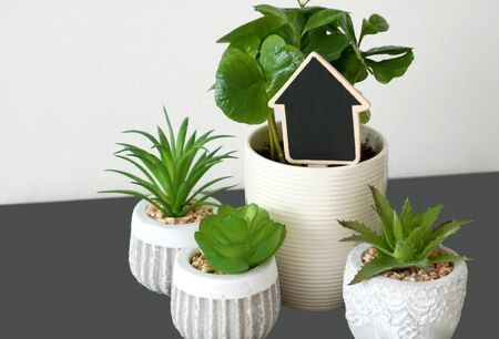 Houseplants in pots. Collection of green plants in pots as home decor with small black chalk writing board in shape of arrow in the up direction and free copy space