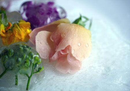 Dewy, tiny, light pink natural rose, close up