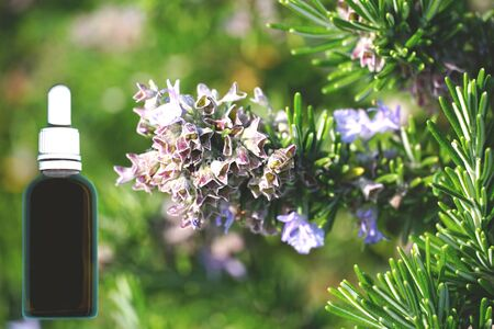 Sprigs of blooming rosemary or Salvia rosmarinus and glass dropper bottle mockup. Essential oil and herb medicinal preparation concept