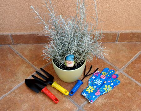 Balcony gardening concept. Immortelle plant and tools for home gardening at balcony Banque d'images