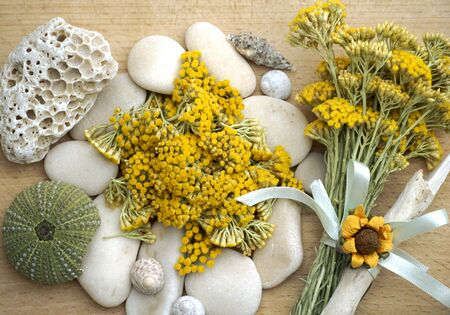 Immortelle or everlasting yellow flowers and bouquet with sea stuff, pebbles and seashells. Funny vibrant background with immortelle herb