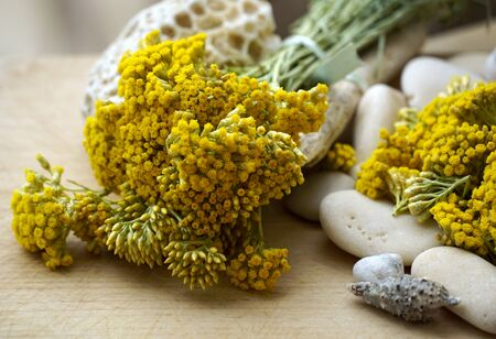 Everlasting plant steams with yellow flowers in the bouquet, decorated with seashells and pebbles Standard-Bild