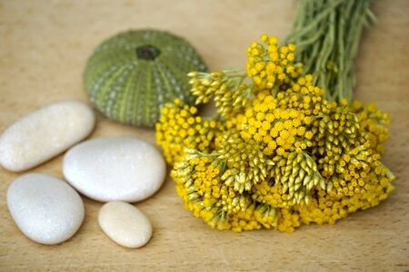 Immortelle in the bouquet. Fresh bouquet of immortelle sprigs with pebbles and sea urchin shell