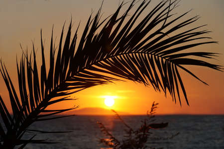 Silhouette of palm branch in front of sundown in the beautiful seascape
