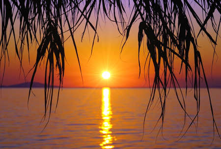 Black silhouette of palm leaves on the vibrant sunset background Standard-Bild