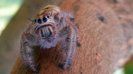 eye: Spider