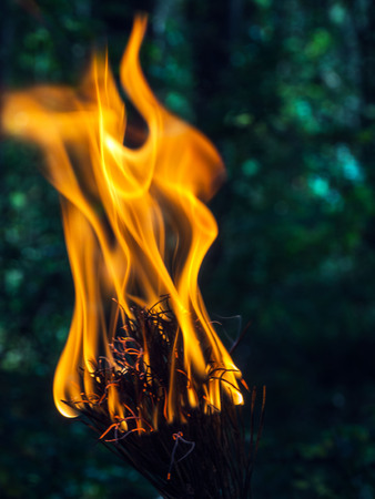 hellfire: A beautifully burning branch of a dry Christmas tree. Blurred background. Safe for the environment and the forest.