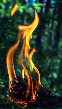 A beautifully burning branch of a dry conifer tree. Blurred background. Safe for the environment and the forest.
