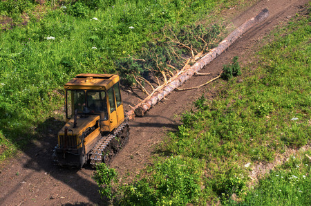 A caterpillar tractor carries trees. Logging or cleaning the forest.
